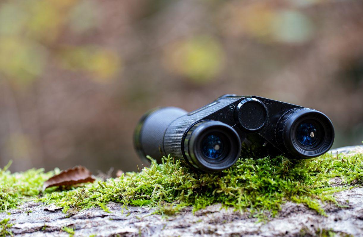binoculars on a tree